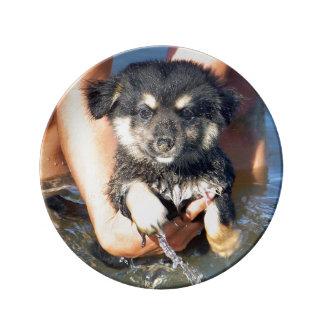 Fotografía mullida linda del perro de perrito plato de cerámica