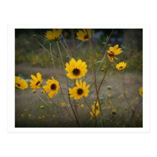Fotografía negra amarilla del Wildflower de la Postal