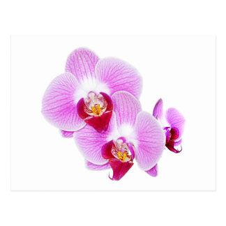Fotografía radiante del primer de la orquídea postal