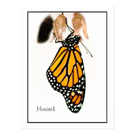 Fotografía recién nacida de la mariposa de monarca tarjeta postal