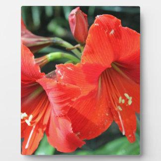 Fotografía roja hermosa de la flor placa expositora