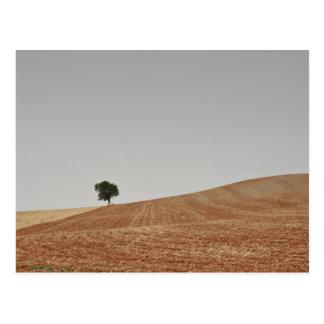 fotografias del Camino de Santiago Postal
