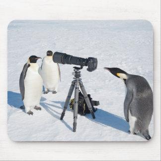 Fotógrafo del pingüino - cojín de ratón alfombrilla de ratón