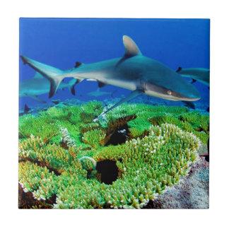 Fotos del tiburón del filón azulejo