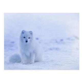 Fox ártico del bebé postal