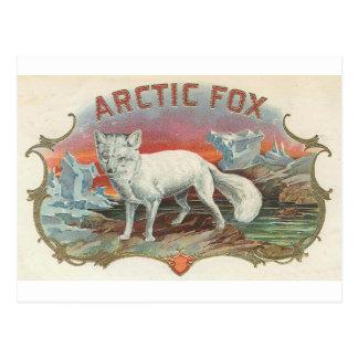 Fox ártico del vintage postal