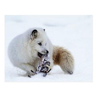 Fox ártico - El Snacking Postal