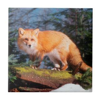 Fox rojo en un registro azulejo cuadrado pequeño