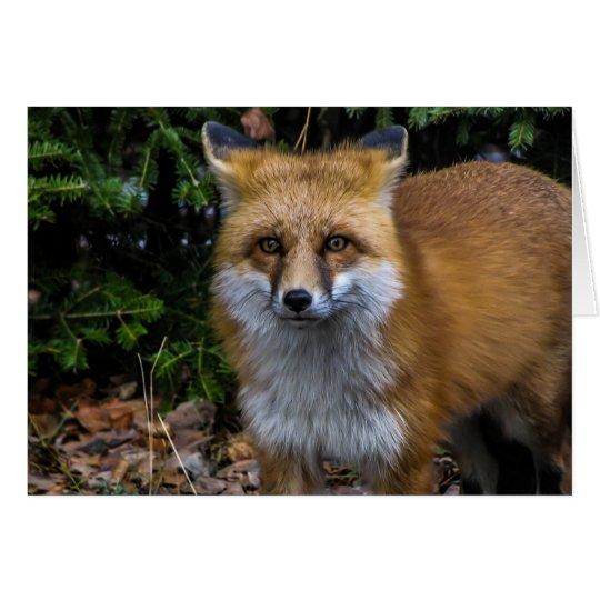 Fox rojo salvaje tarjeta de felicitación