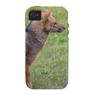 Fox - Torres del Paine iPhone 4/4S Funda