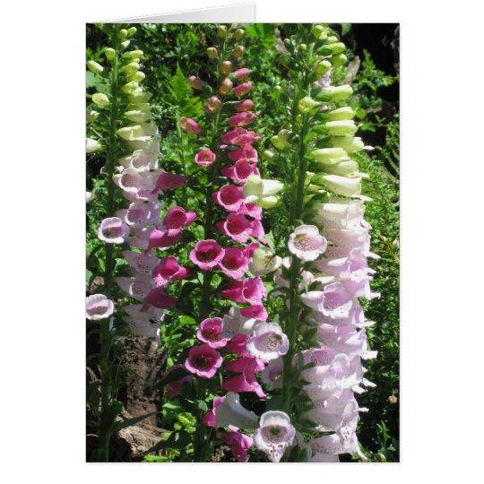 Foxgloves rosados tarjeta de felicitación