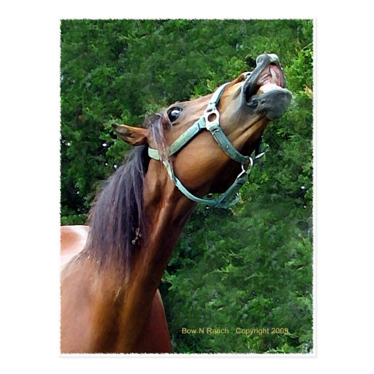 Frambuesa del caballo (estilo del caballo de la postal