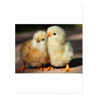 Fraternidad del polluelo postales