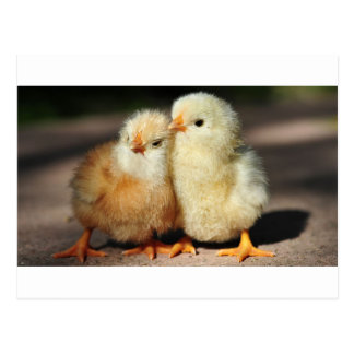 Fraternidad del polluelo