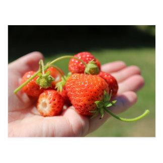 Fresas en la mano postal