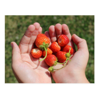 Fresas en las manos postal