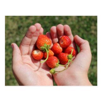 Fresas en las manos postales