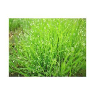 frescor, hierba, pradera, morning, grass, meadow, impresión en lienzo