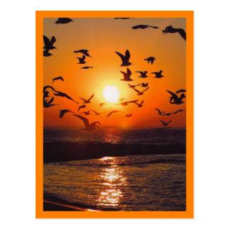 Frontera del naranja de la escena de la puesta del postal