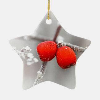 Fruta congelada ornamentos para reyes magos