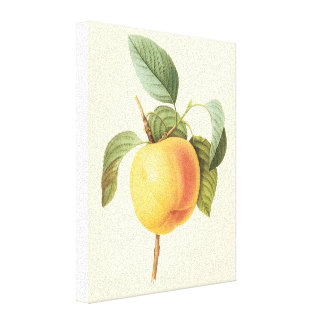 Fruta de la comida del vintage, Calville Apple por Impresion En Lona