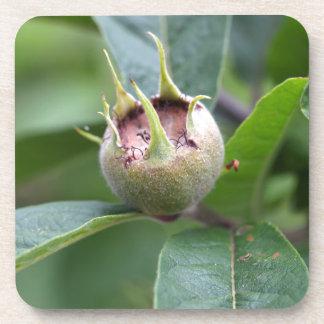 Fruta del níspero común posavasos