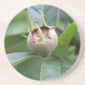 Fruta del níspero común posavasos de arenisca
