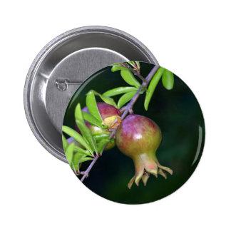 Fruta verde de la granada chapa redonda de 5 cm