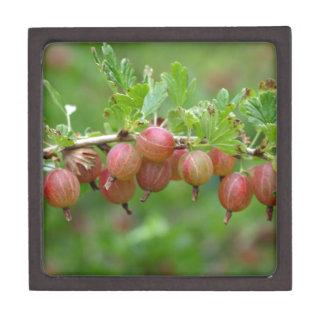 Frutas de una grosella espinosa caja de regalo