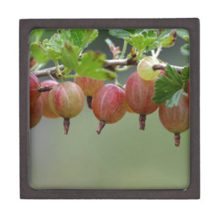 Frutas de una grosella espinosa joyero