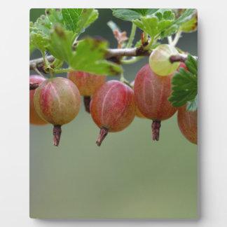 Frutas de una grosella espinosa placa expositora