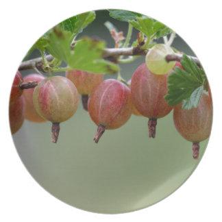 Frutas de una grosella espinosa plato