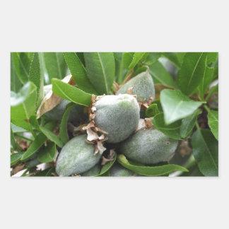 Frutas verdes de un árbol de almendra pegatina rectangular