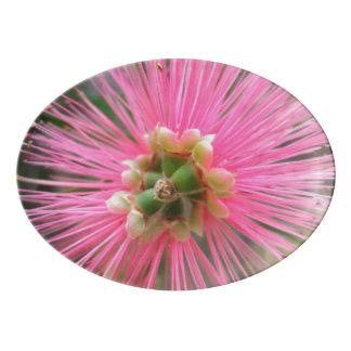 Fuente De Porcelana Flor rosada del árbol de goma