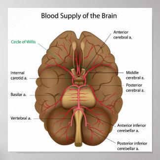 Fuente de sangre del poster del cerebro