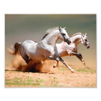 funcionamiento de dos caballos blancos impresión fotográfica