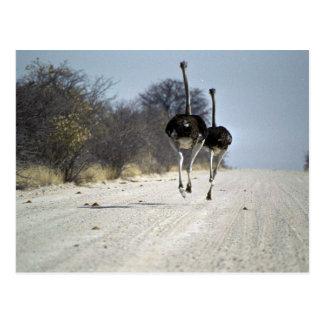 Funcionamiento de las avestruces postal