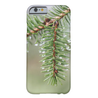 Funda Barely There iPhone 6 Árbol de pino de la gota de agua, fotografía macra