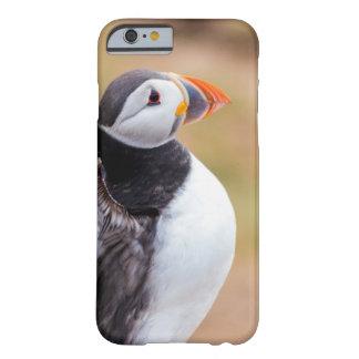 Funda Barely There iPhone 6 Caso del iPhone del frailecillo