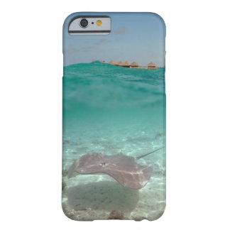 Funda Barely There iPhone 6 Pastinaca subacuática en caso del iPhone de Bora