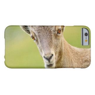 Funda Barely There iPhone 6 Retrato de un cabra montés