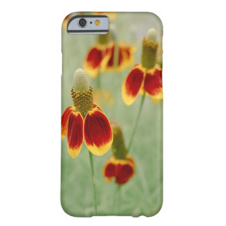 Funda Barely There iPhone 6 Wildflowers de Tejas del gorra mexicano