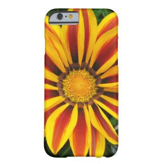 Funda Barely There Para iPhone 6 Foto anaranjada hermosa de la flor de Sun