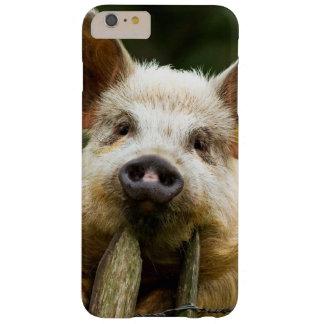 Funda Barely There Para Phone 6 Plus Dos cerdos - granja de cerdo - granjas del cerdo