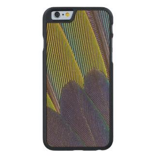 Funda De Arce Para iPhone 6 De Carved Detalle de la pluma de Jenday Conure
