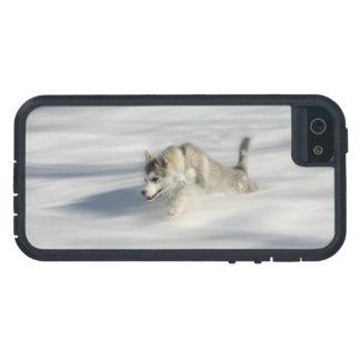 Funda iPhone SE/5/5s El volar en un sueño de Huskys - caso del iPhone 5