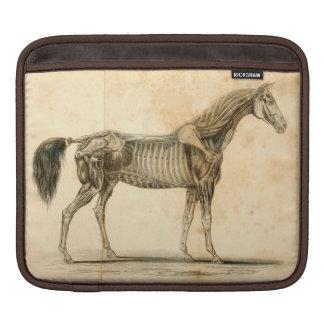Funda Para iPad Manga del iPad de la anatomía del caballo