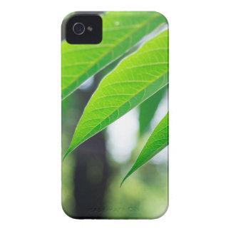 Funda Para iPhone 4 Ailanthus Defocused y borroso de la rama
