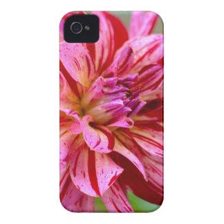 Funda Para iPhone 4 Belleza de la dalia
