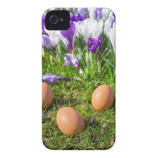 Funda Para iPhone 4 Cinco huevos flojos que mienten cerca de azafranes